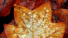 Przyszła jesień, będzie padać
