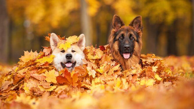 Co sprawia, że psy kradną nasze serca