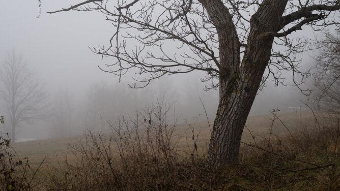 Pogoda na 5 dni: mgliste poranki, miejscami słabe opady